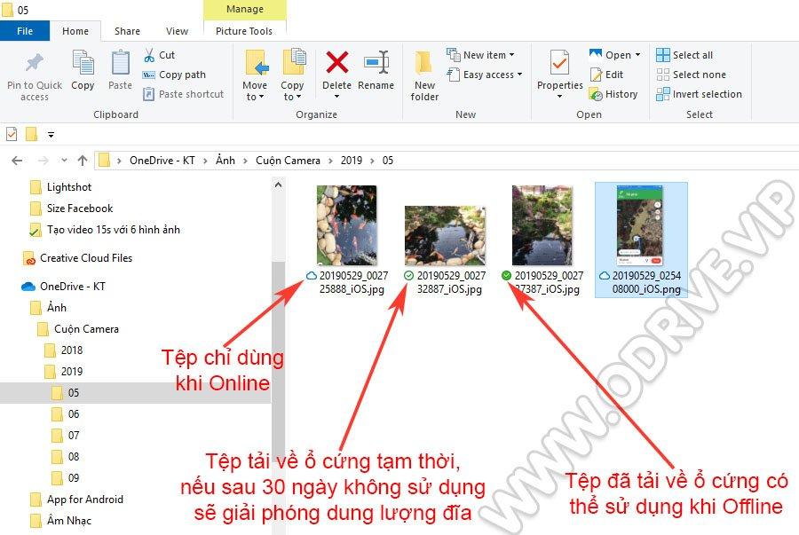 Trạng Thái Tệp OneDrive